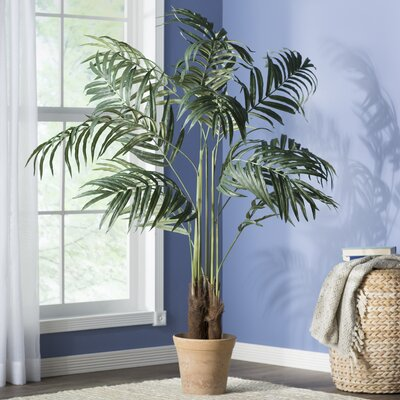 entracing palm tree type house plant. Big Palm Tree in Pot  by Beachcrest Home Nearly Natural Double Robellini Reviews Wayfair