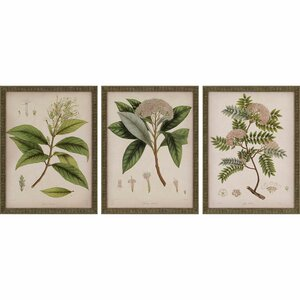 'Plants II' by Mendez 3 Piece Wall Art Set by Paragon