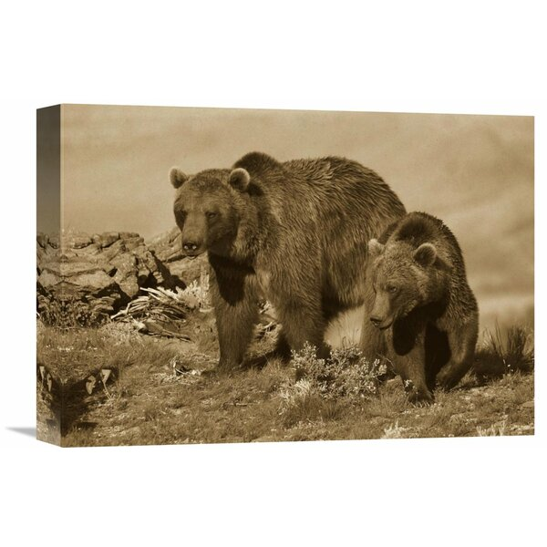 Nature Photographs Grizzly Bear Mother with a One Year Old Cub, North America by Tim Fitzharris Photographic Print on Wrapped Canvas by Global Gallery