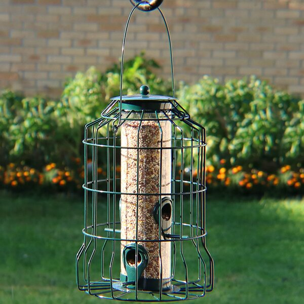 Auger 4-Peg Squirrel-Proof Wild Tube Bird Feeder b