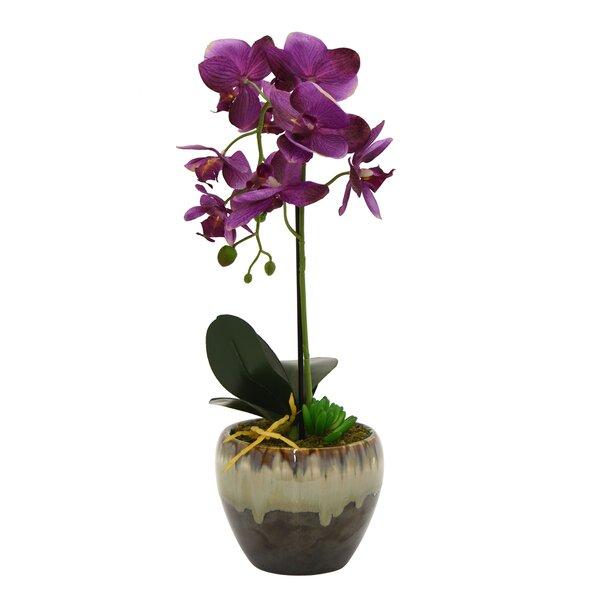 Orchids Desktop Stem in Pot by Bungalow Rose