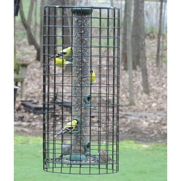 Tube Bird Feeder by Birds Choice