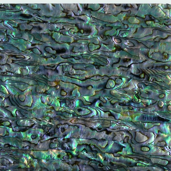 3 x 6 SeaShell Laminate Subway Tile in Blue Green Abalone (Set of 8) by Matrix-Z