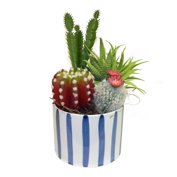 Garden Desktop Succulent Plant in Pot by Bungalow Rose