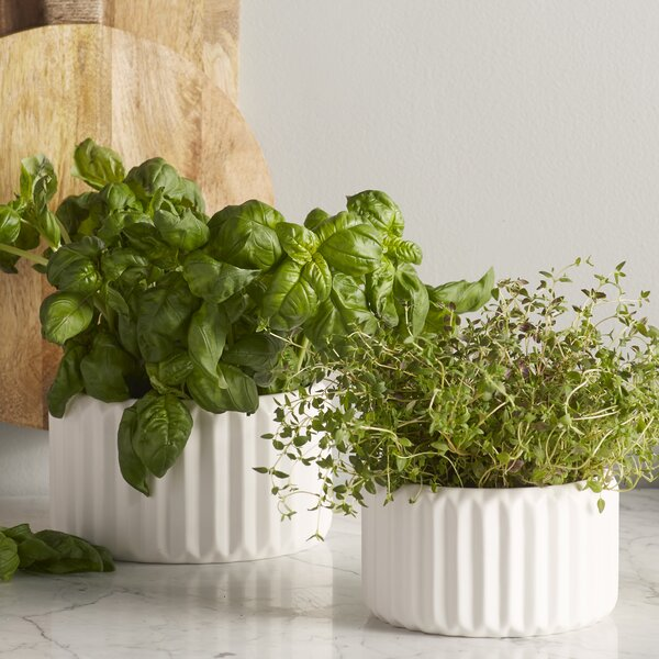 Junius Fluted 2-Piece Ceramic Pot Planter Set by Langley Street
