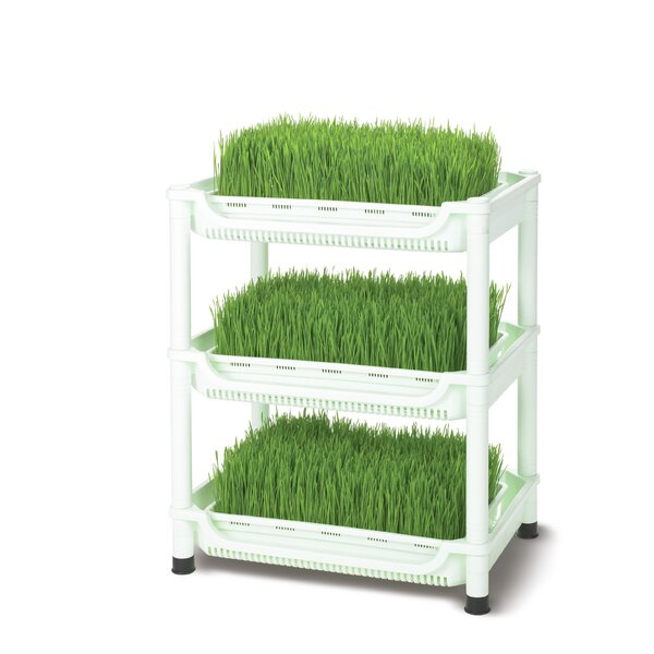 Small Deluxe Soil-Free Wheatgrass Grower by Tribest