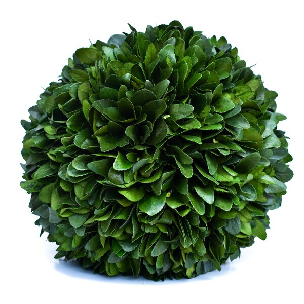 Preserved Laurel Ball Desktop Topiary by Gracie Oaks