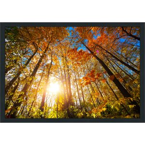 Autumn Aura Framed Photographic Print by Picture Perfect International