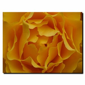 'Hypnotic Yellow Rose' by Kurt Shaffer Framed Photographic Print on Wrapped Canvas by Trademark Fine Art