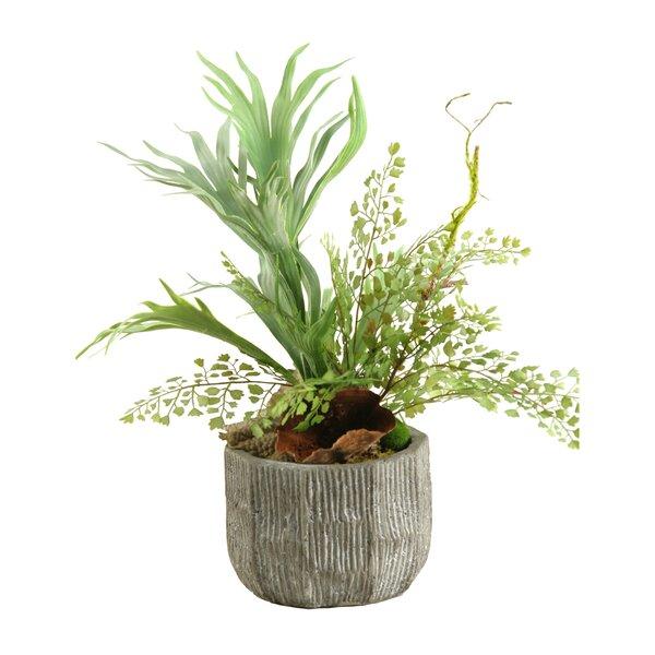 Mini Staghorn Fern and Flat Iron Fern Desk Top Plant in Pot by D & W Silks