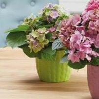 Kiruna Clay Pot Planter by SK USA