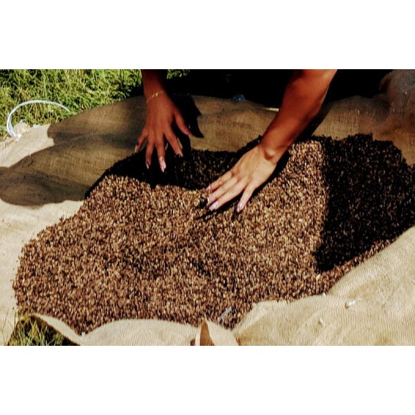 Organic Buckwheat Hulls Replacement Fill By White Lotus Home