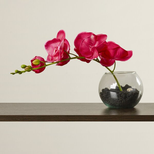 Orchid in Bowl with Soil by Zipcode Design