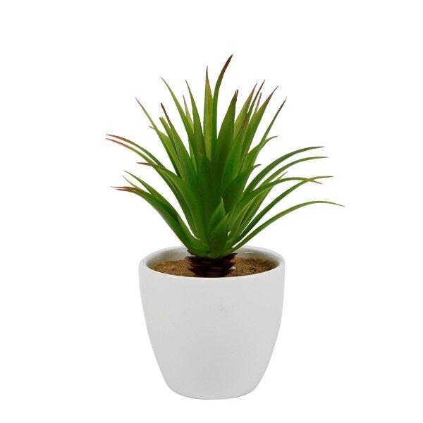 Pineapple Top Desktop Succulent Plant in Pot by Wrought Studio