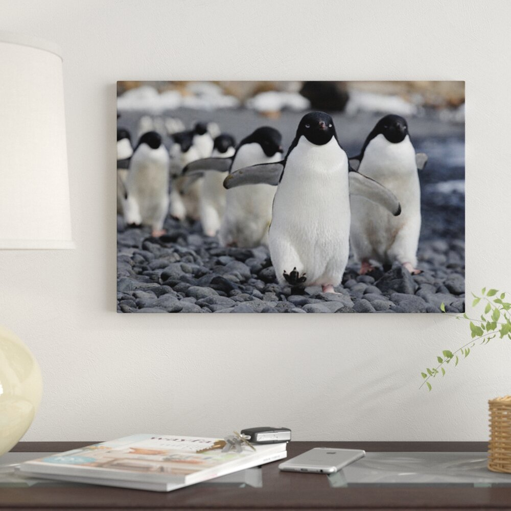 East Urban Home Adelie Penguin Group Marching To Colony Antarctic Peninsula Antarctica Photographic Print On Canvas Wayfair