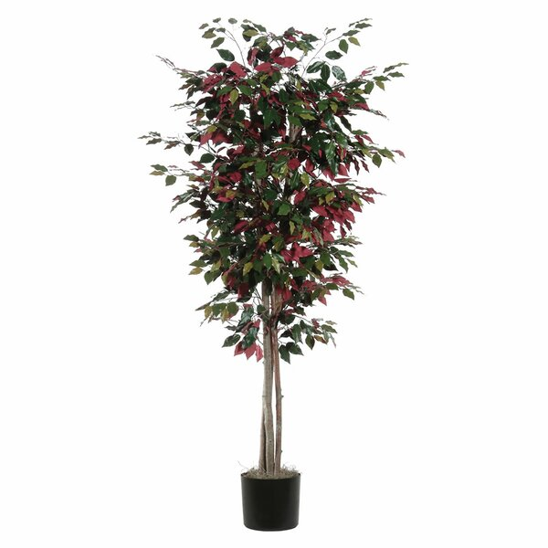Capensia Deluxe Tree in Pot by Alcott Hill