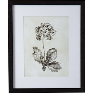 'Flora II' Framed Painting Print by August Grove