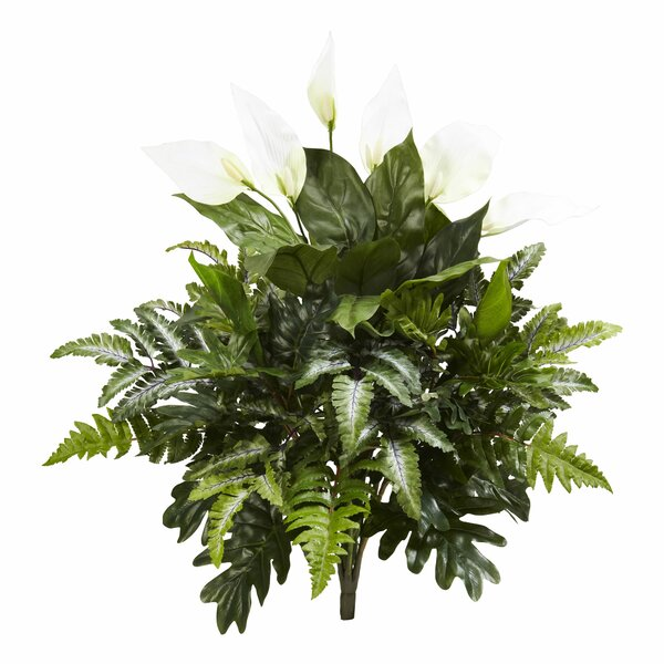 Mixed Spathiphyllum Desktop Foliage Plant (Set of 2) by Charlton Home