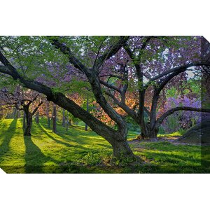 Spring Awakens Framed Photographic Print on Wrapped Canvas by West of the Wind Outdoor Canvas Art