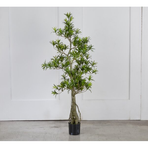 Potted Podocarpus Floor Foliage Tree in Pot by Bay Isle Home