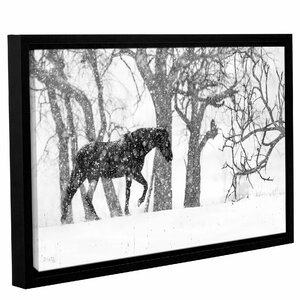 'Desperado' Framed Photographic Print on Canvas by Laurel Foundry Modern Farmhouse