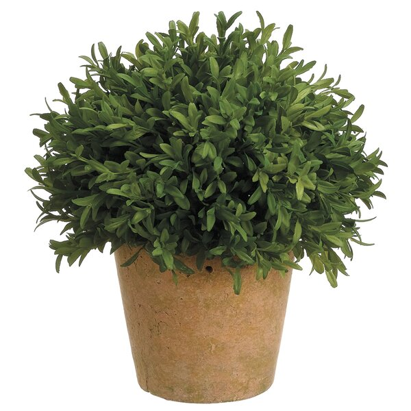 Artificial Tea Leaf Ball Desktop Boxwood Topiary in Pot by Charlton Home