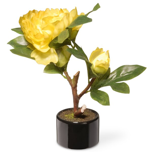 Peony Flowers in Pot by Zipcode Design