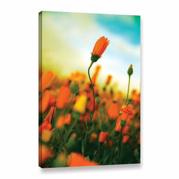 African Daisy by Elena Ray Photographic Print on Wrapped Canvas by ArtWall