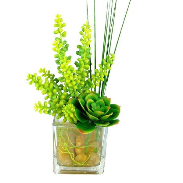 Succulents Cube Desktop Plant in Vase by Bungalow Rose