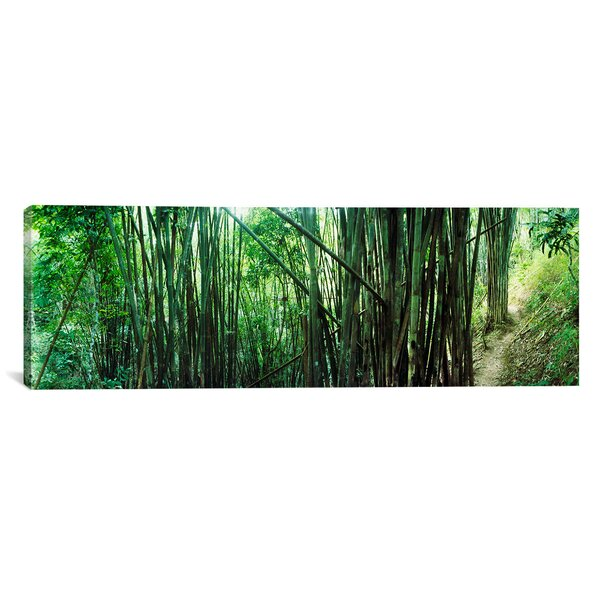 Panoramic Bamboo Forest, Chiang Mai, Thailand Photographic Print on Canvas by iCanvas