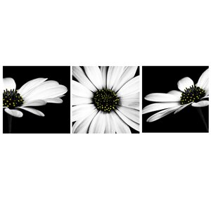 Monochrome Flower 3 Piece Photographic Print on Canvas Set by Arthouse