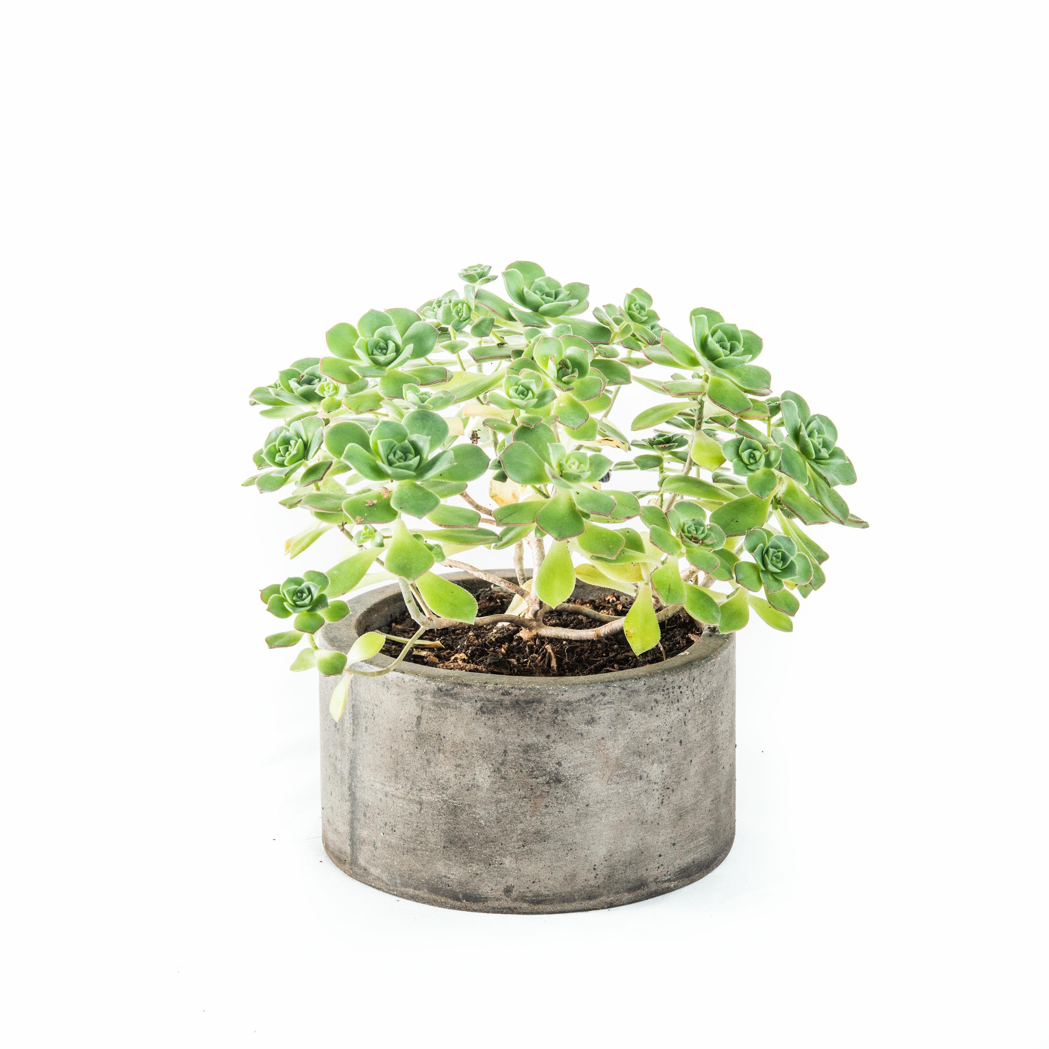 shallow sweet diy suburban weekend succulent indoor img planter image bliss