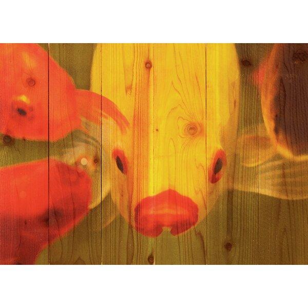 Fish Lips Photographic Print by Gizaun Art
