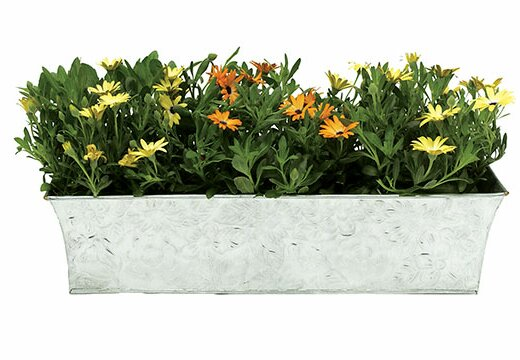 Metal Rail Planter by ACHLA