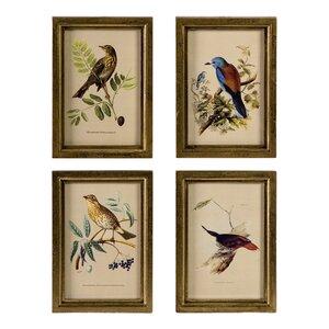 Avian Framed Prints (Set of 4) by Birch Lane™