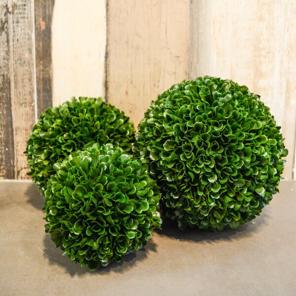 Faux Preserved Boxwood Plant (Set of 3) by Ophelia & Co.