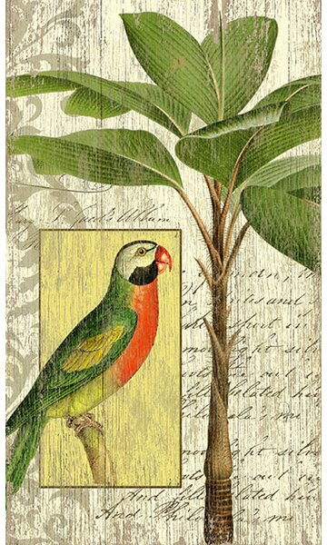 Parrot I by Suzanne Nicoll Graphic Art Plaque by Bay Isle Home