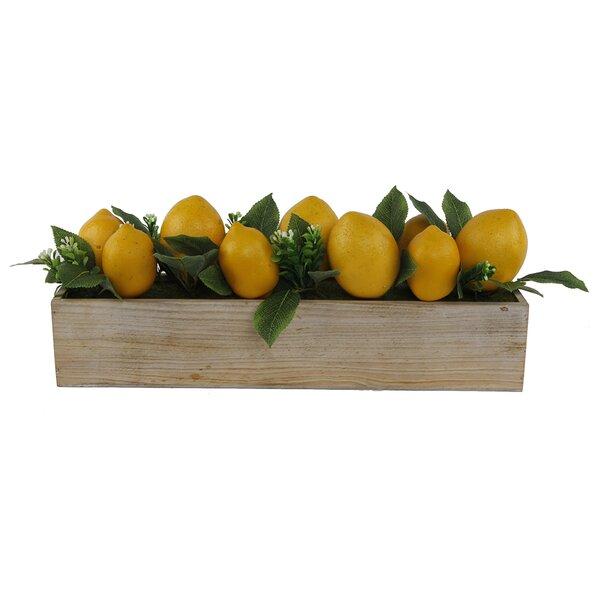20 Beaded Lemons Desktop Succulent Plant in Wood Ledge LG by August Grove