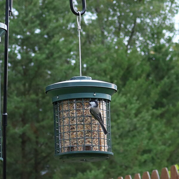 Triple Tube Bird Feeder by Wildon Home ®