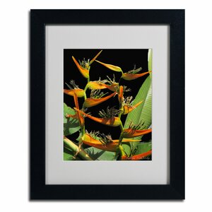 Tropical Paradise by Kathie McCurdy Framed Photographic Print by Trademark Fine Art