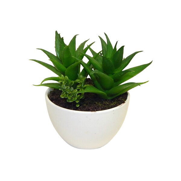 Succulent Plant in Pot by Langley Street