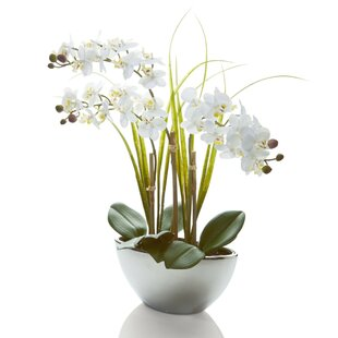 Artificial Plants & Trees You\'ll Love | Buy Online | Wayfair.co.uk