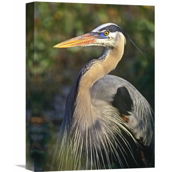 Nature Photographs Great Blue Heron Portrait, North America by Tim Fitzharris Photographic Print on Wrapped Canvas by Global Gallery