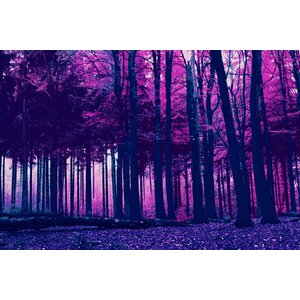Incandescent Forest Graphic Art on Canvas by Salty & Sweet