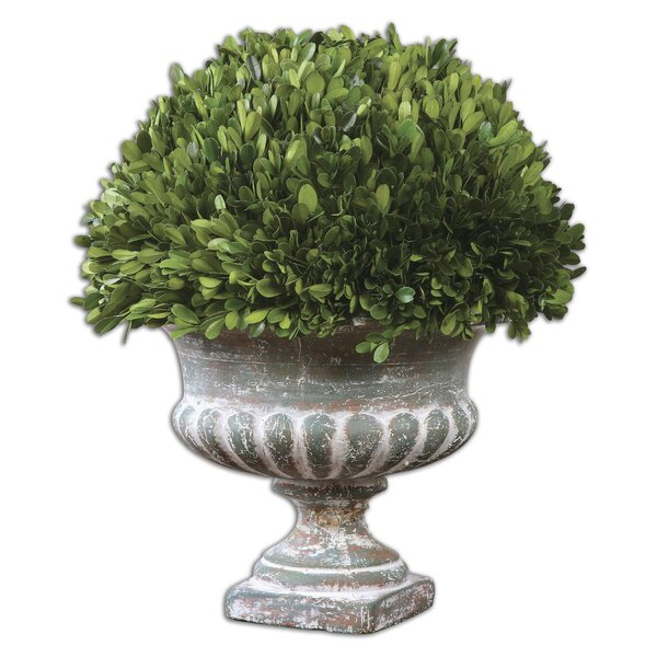 Preserved Boxwood Garden Urn Topiary in Planter by Uttermost