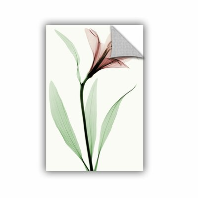 """Lily II Graphic Art on Canvas Lark Manor Size: 36"""" H x 24"""" W x 0.1"""" D"""
