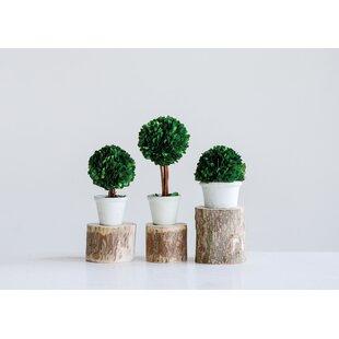 4 Ft Topiary Wayfair
