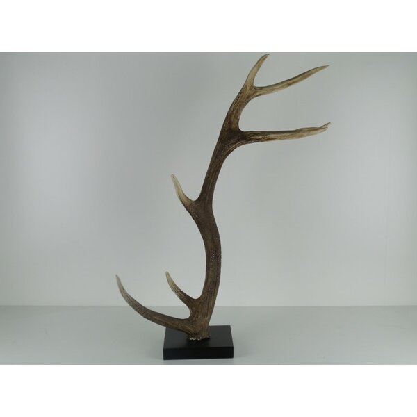 Briscoe Polyresin Horn with Stand by Millwood Pines