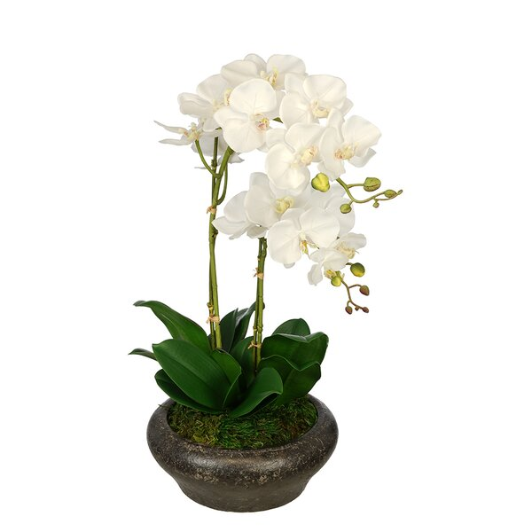 Artificial Double Stem Orchid in Stone Bowl by House of Silk Flowers Inc.