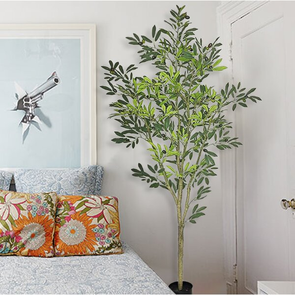 Fruiting Olive Floor Ficus Tree in Pot by Fleur De Lis Living